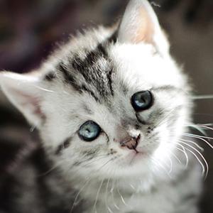 猫咪声音大全