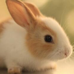 兔子声音大全